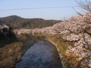 2011sakura001